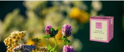 Holunderblüte, Rhabarber & Rose